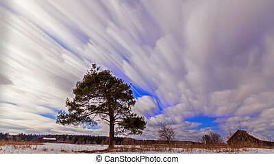 Separately growing pine against the sky. Blurry. Time Lapse...