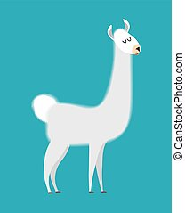 Lama isolated. Cute alpaca animal. South American mammal