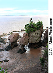 Hopewell Rocks, New Brunswick, Canada - Muddy water with the...