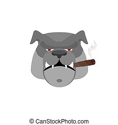 Angry dog ??with cigar. Aggressive bulldog isolated