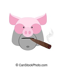 Angry boar with cigar. Aggressive pig isolated