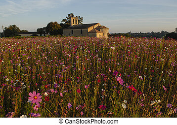 Churche, chapel with flowers field, Gironde, France -...