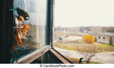Bird Titmouse Eats Bread and Lard on a Wooden Window Sill....