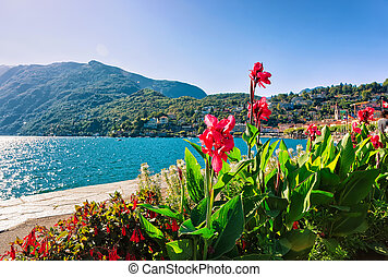 Flowers at Embankment of Ascona in Ticino in Switzerland -...