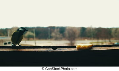 Bird Titmouse Eats Bread on a Wooden Window Sill. A titmouse...