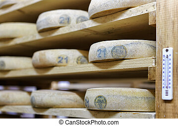 Aging Cheese in the maturing cellar Franche creamery Comte -...