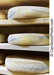 Aging Cheese at the maturing cellar Franche creamery Comte -...