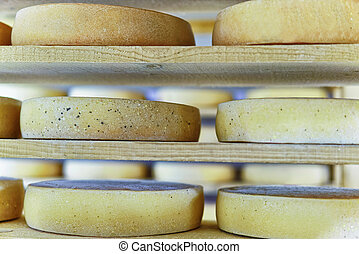 Comte Aging Cheese in ripening cellar Franche creamery -...