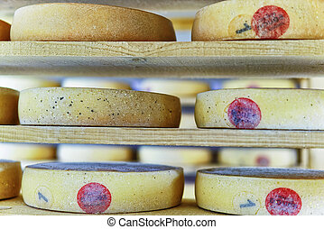 Comte Aging Cheese on ripening cellar Franche creamery -...
