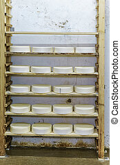 Comte Young Cheese in maturing cellar Franche creamery -...