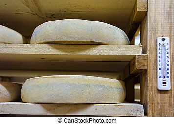 Shelves of aging Cheese at ripening cellars Franche Comte...