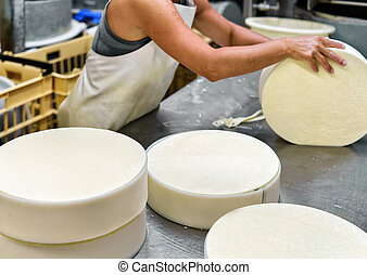 Cheese maker putting young Gruyere Comte Cheese into forms...