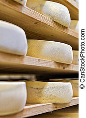 Stack of aging Cheese at maturing cellar creamery Franche...