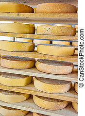 Stack of aging Cheese at ripening cellar creamery Franche...