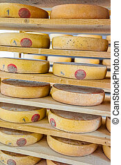 Stack of aging Cheese in ripening cellar creamery Franche...