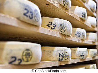 Aging Cheese in maturing cellar Franche creamery Comte -...