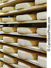 Rack of aging Cheese at ripening cellar Franche Comte...