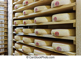 Rack of aging Cheese in maturing cellar Franche Comte...