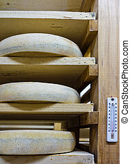 Shelves of aging Cheese at maturing cellar Franche Comte...