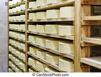 Wheels of young Cheese in ripening cellar Franche Comte...