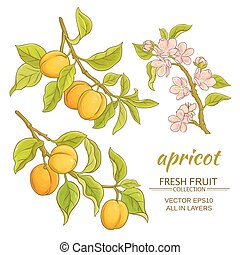 apricot vector set - apricot branches vector set on white...