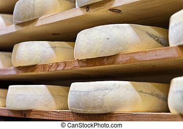 Stack of aging Cheese at maturing cellar Franche Comte...