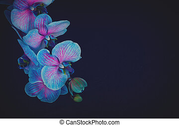 Bunch of violet orchids - Bunch of fresh blue orchids on...