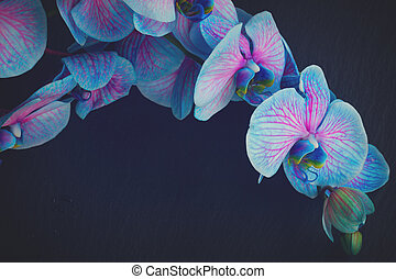 Bunch of violet orchids - Bunch of blue orchid flowers close...