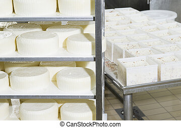 Pieces of fresh cheese on the shelves