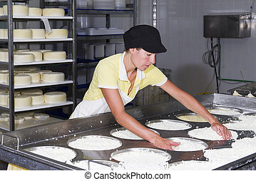 Cheesemaker preparing fresh cheese to divide it into several...