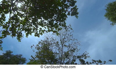 Bottom view to summer green trees and sunny sky - video in...