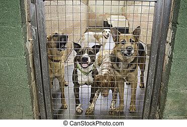 Sad abandoned dogs - Locked kennel dogs abandoned, sadness
