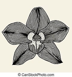 floral orchid vintage drawing vector illustration isolated