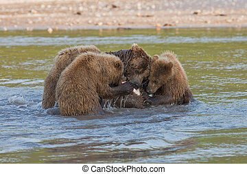 Bear with bear cubs
