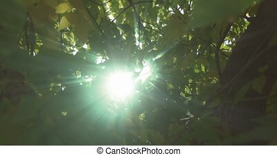 Nature blur green bokeh light through leaves canopy up look....
