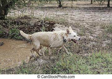 Dog mud bath