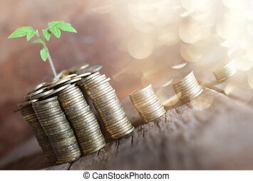 plant with coins on wooden background - pile of copper coins...
