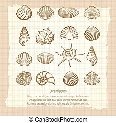 Vintage notebook page with sea shells