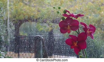 Tropical Rain - Tropical rain viewed through the window,...