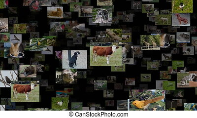 Photo stream of animals moving UP, seamless loop