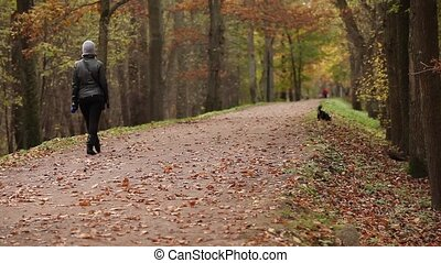 woman and dog walk in park in autumn - unrecognizable woman...