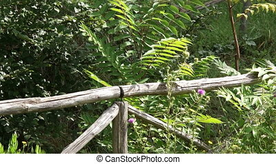 Rustic wooden fence in the Park among the green plants
