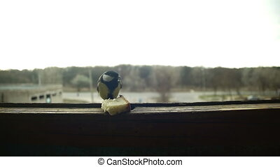 Bird Titmouse Eats Bread on a Wooden Window Sill. Slow...