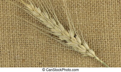 Rotation of the spikelet of wheat lying on sackcloth.