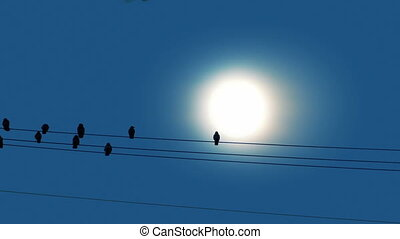 Bird Lands On Wire In Front Of Sun - Many birds sitting on...