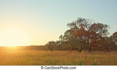 Sunset Tree in Field