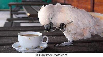 cacatúa, taza, café