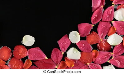 Floating rose petals in the water in the wind. View from...