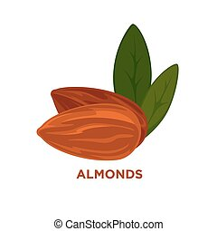 almond nut, vector cartoon illustration. - almond nut with...