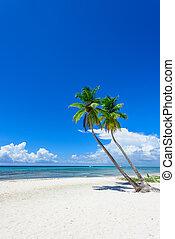 tropicais, praia, palma, paraisos